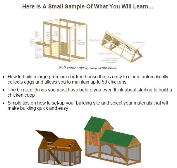building a chicken coop scam