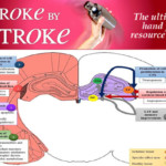 Stroke by Stroke Review - ALL you need to KNOW!!