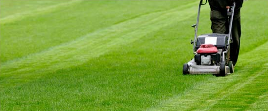 Make Money With Your Own Grass Cutting Service